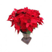 Christmas 26 in. Velvet Poinsettia in Urn