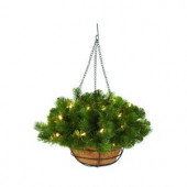 20 in. Downswept Douglas Fir Hanging Basket